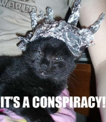 LOL Cat wearing tinfoil hat