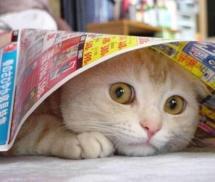 01-scaredy-cat1